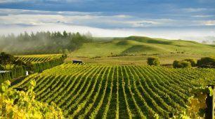 Nový Zéland – Krajina a víno